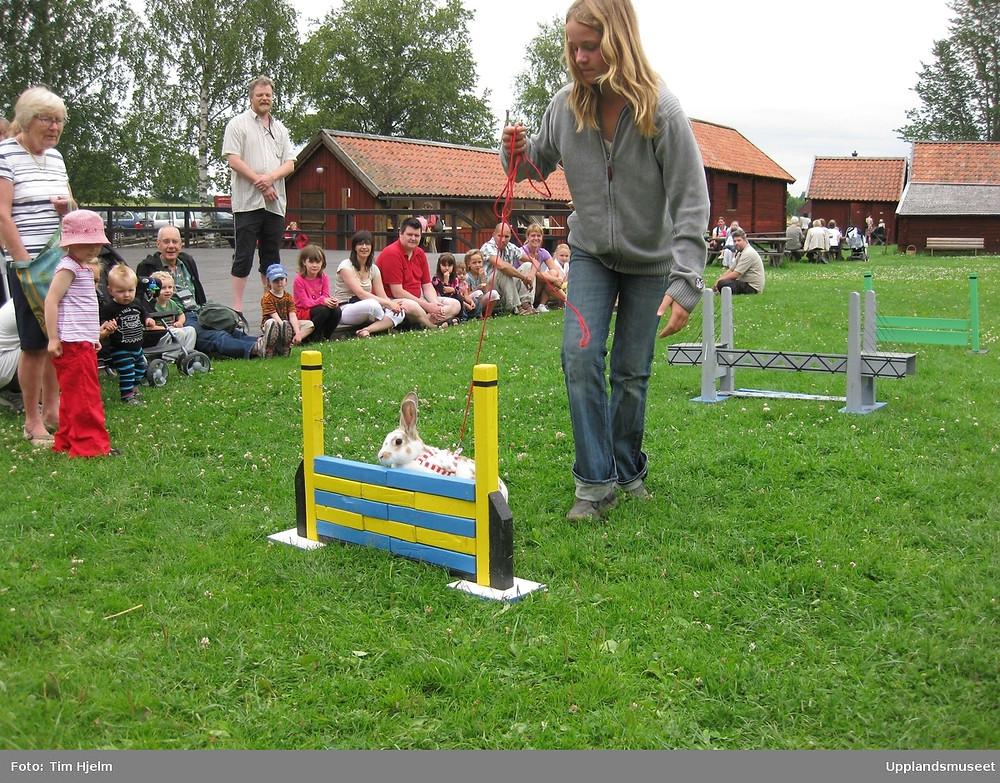 White rabbit negotiates a kaninhopp course led around by its female owner