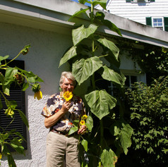 John and summer sunflower