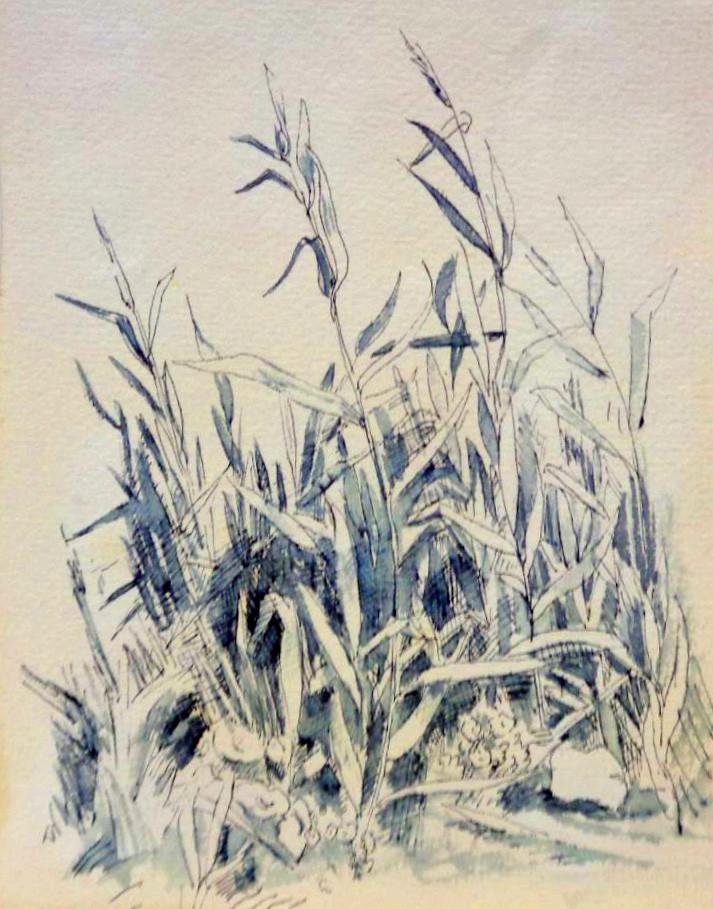 FR053grasses.jpg