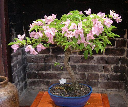 Copy of Bouganvillea+c1999+$495+sm.jpg