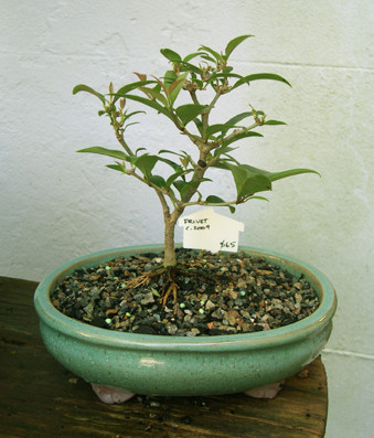 Copy of Privet+$65.jpg