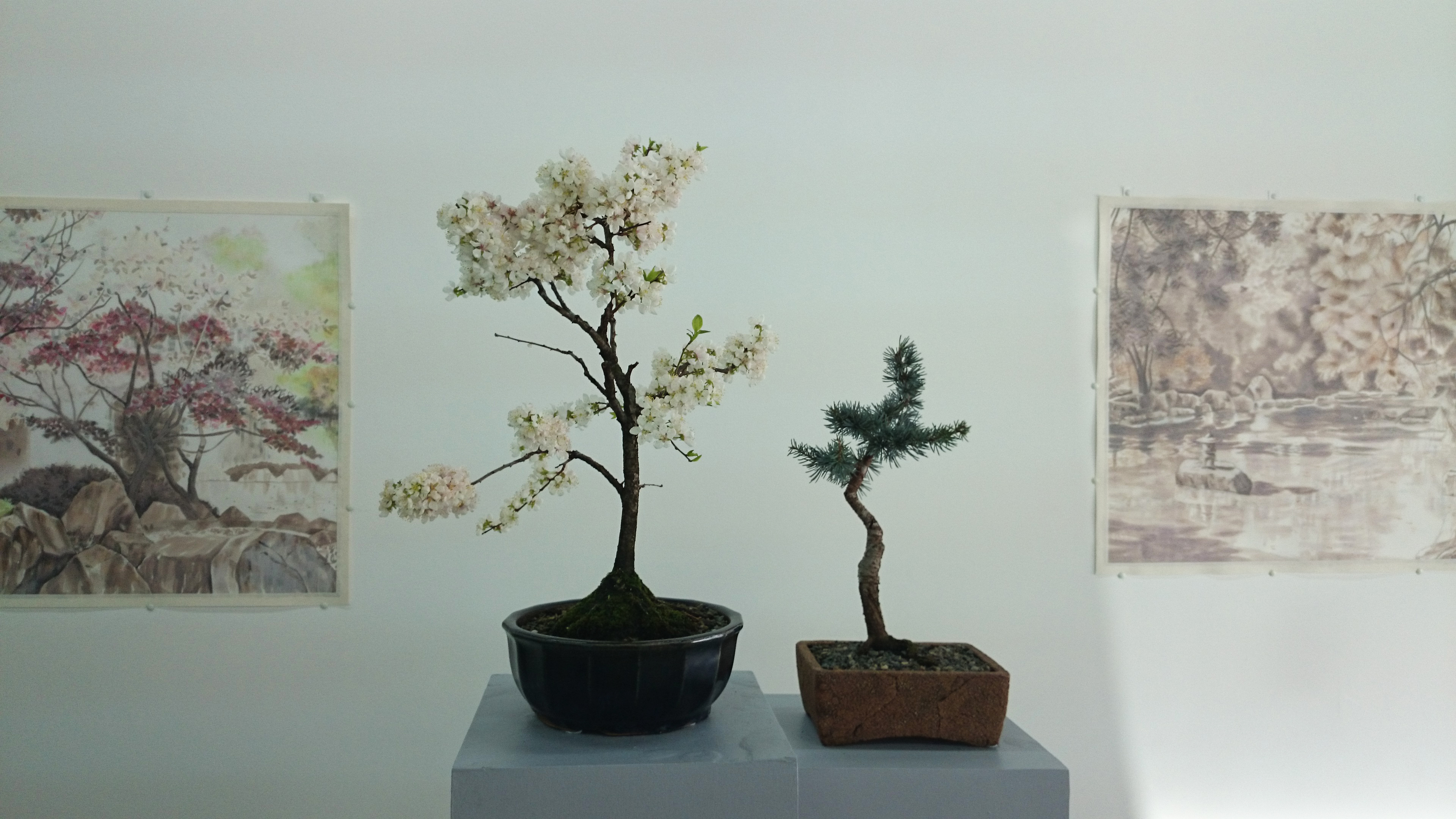 Kristel Smits' Drawings with Thor's bonsai - Miniature Cosmos.jpg