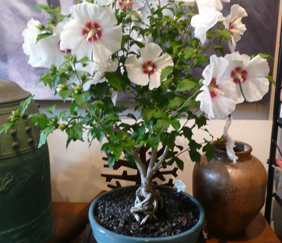 Copy of Hibiscus $395.jpg