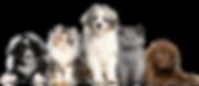 kisspng-cat-dog-puppy-kitten-pet-5b0df77