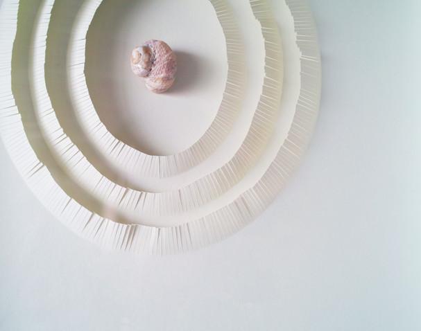佐久島の貝殻