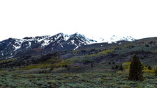 Grove Near Rush Creek