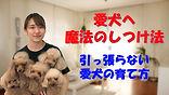 YouTube82.jpg