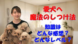 YouTube41.jpg