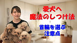 YouTube76.jpg