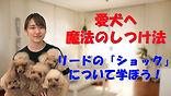YouTube77.jpg