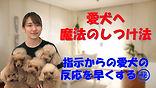 YouTube95.jpg