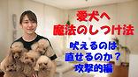 YouTube66.jpg