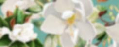 magnoliaRec.jpg