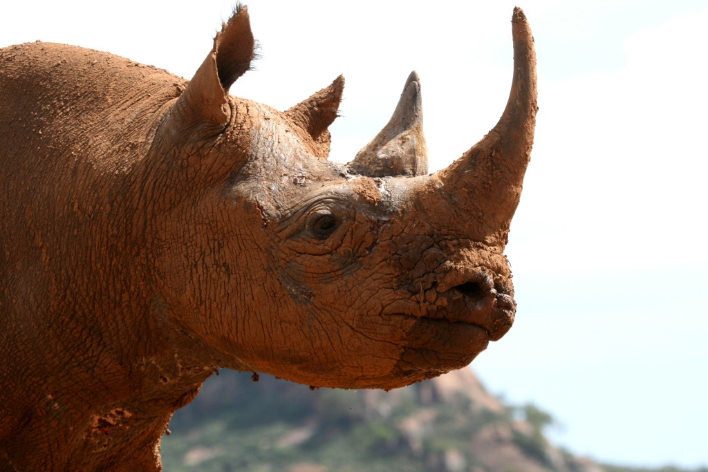Adventure for Rhinos