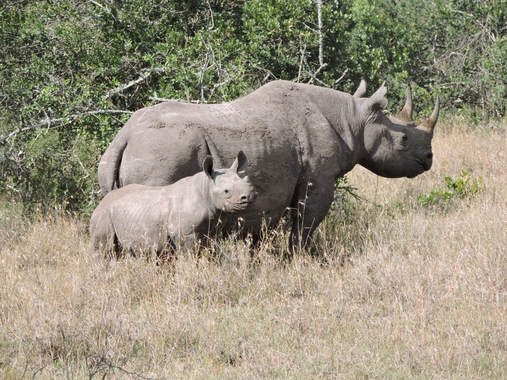 Adventure for Rhinos