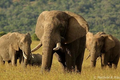 elephant+family.jpg
