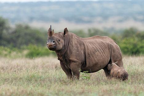 BlackRhinoceros_TDR_03Mar10_1098.jpg