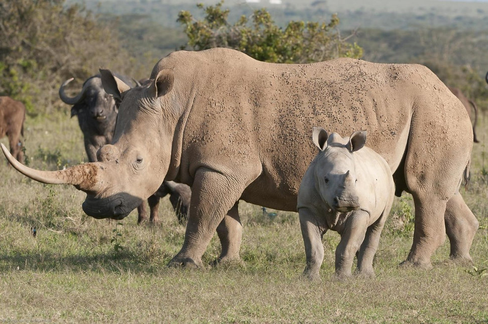 WhiteRhino_TDR_12Sep11_0271 (Medium).jpg