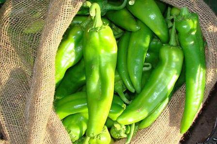 green chili.jpg
