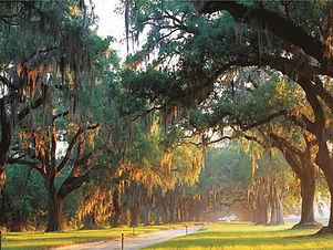 Charleston Boone Hall.jpg