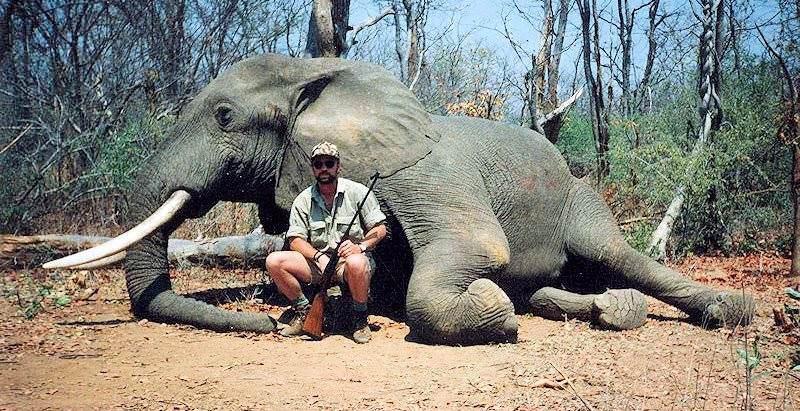 bg_bg_elephant.jpg