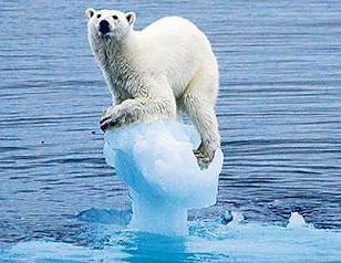 polar bear..2.jpg