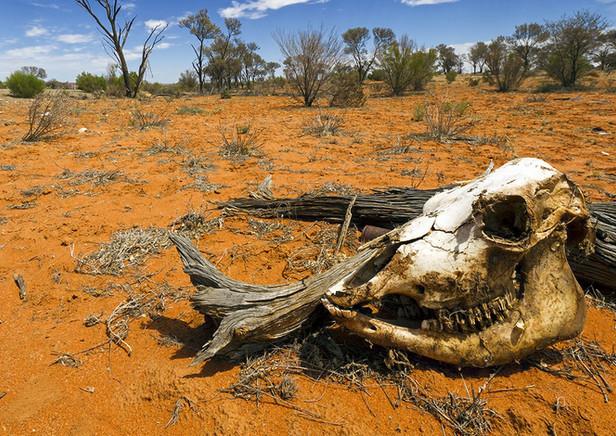 skull-desert-drought-australia-1550x787.