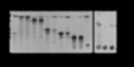 Li et al. 2012 Eukaryotic Cell.png