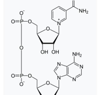 NADH Analysis by UPLC-UV