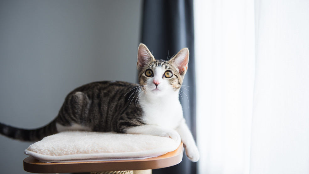 Home Is Where the Heart Is – Keeping Your Indoor Cat Entertained