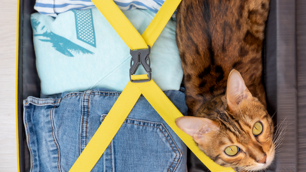 What to do with your cat when you go on holiday