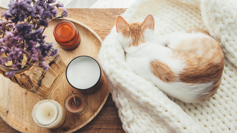 How to Help Your New Cat Adjust to Your Home