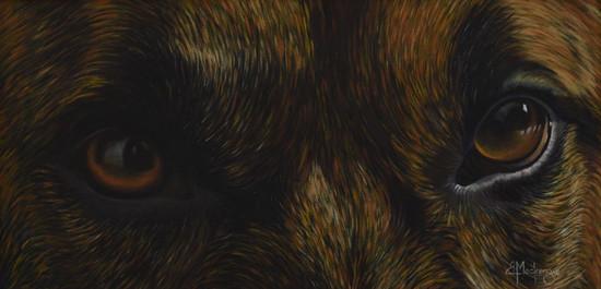 Ringos Eyes