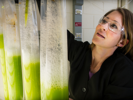 Biofuel: a renewable, drop-in fuel for shipping?