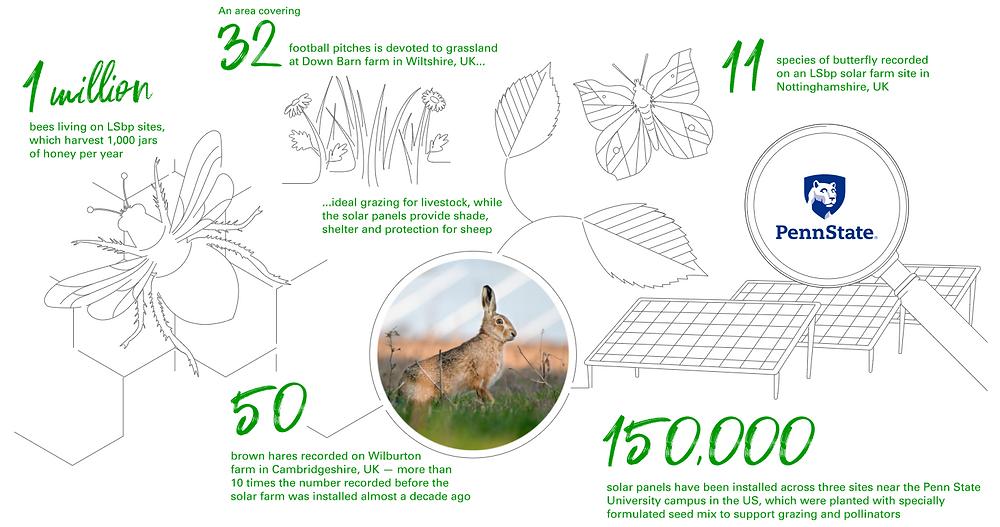 bp solar field statistics collage