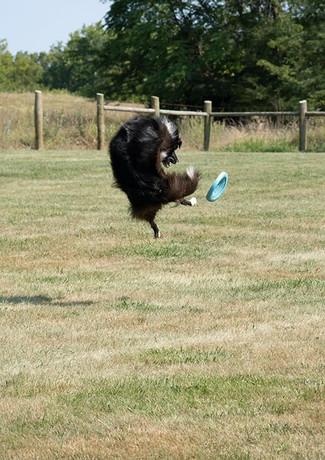 frisbee 8-8-21.jpg