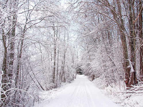 TALVI - Luminen tie, kuvataulu (400x600)mm