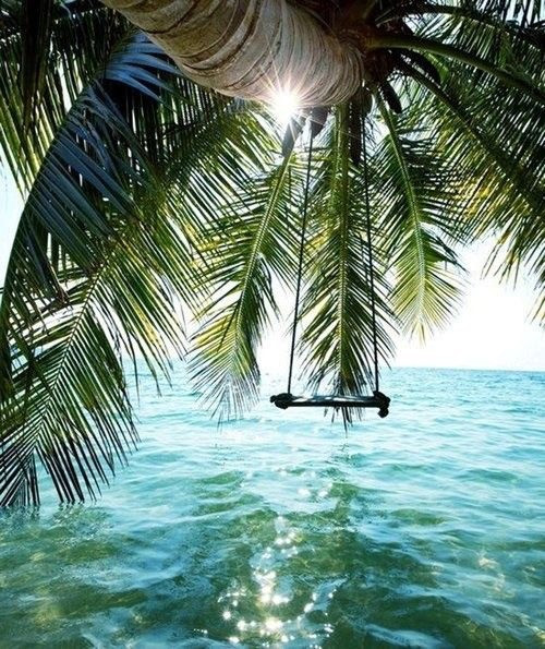 Swing hanging on a giant palm tree Power Breathwork