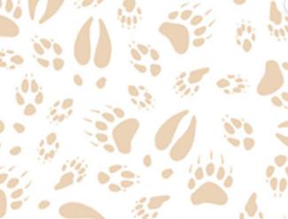 Bear prints 2.jpg