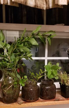 Home-grown plants