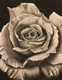 Gray Scale Rose