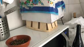 Atelier d'initiation en ligne au compost d'appartement : dimanche 25 juillet à 10 heures