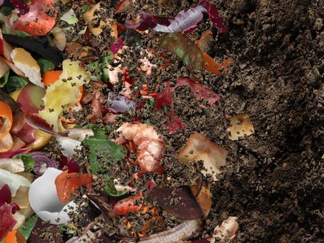 L'apport des morceaux de biodéchets au compost d'appartement