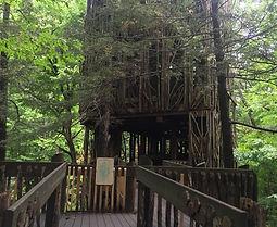cayuga+nature+center,+nature+center+tree