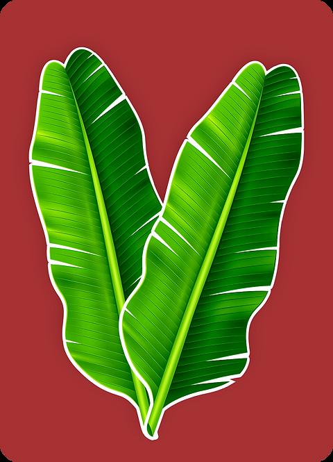 Kit Folha de Bananeira c/ 02