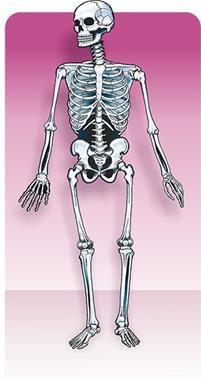 Painel Esqueleton c/ 01 Articulado