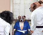 IFFW Short   Dog Judo