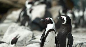 PenguinProtectors_Still.png