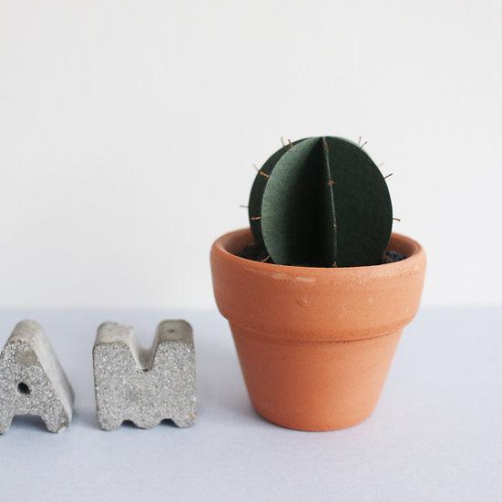 Miniature Round Cactus