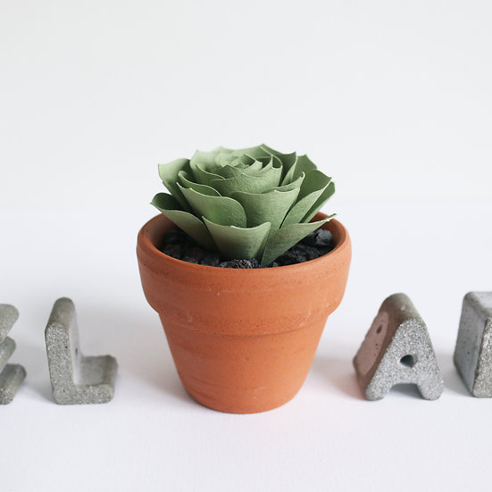 Miniature Echeveria Succulent - Light Green